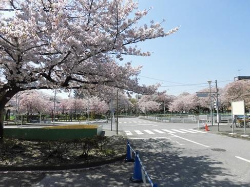negishi170414-1.jpg