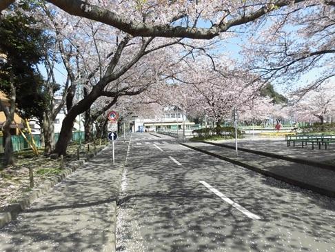 negishi170417-4.jpg